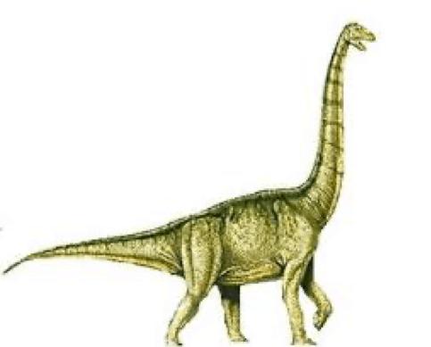 Xenoposeidon | Cool Dino Facts Wiki | Fandom