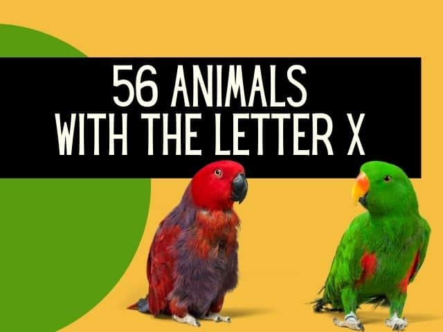 animals with letter x
