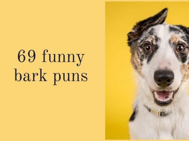 bark puns